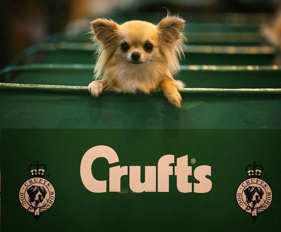crufts limo hire