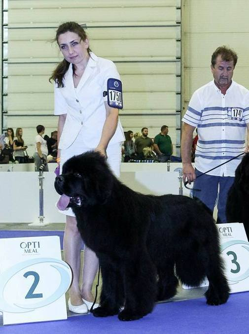Mike Eurodogshow2017